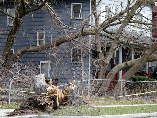 A tree fell into a house on Melville St. in Rochester