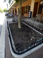 manure used in downtown planter
