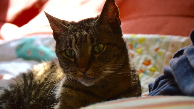Amber Solnick's cat, Bruce, recently died. Dealing with the loss of a pet can be as difficult as losing a human family member.