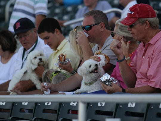 Visitors to Hammond Stadium can bring their pets to watch the Miracle during Dog Daze, with five dates this season:   May 26, June 22, July 8, Aug. 12 and Sept. 2.