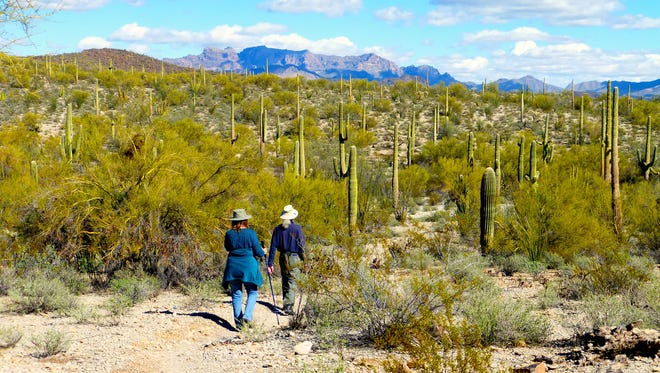 Hikers enjoy mies of trails in Organ Pipe Cactus National Monument.