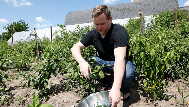 Poco Pizza owner Shawn Pollack picks peppers Tuesday on his family farm south of Van Dyne. Shawn uses the produce from the farm to make frozen pizzas in a building on the farm and sells them over the internet.