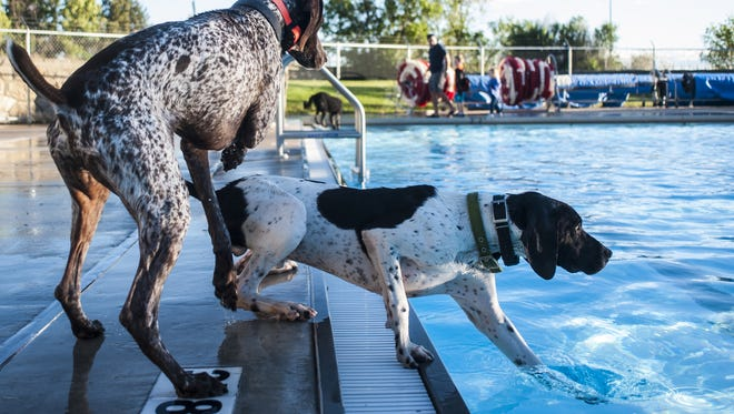 Dogs frolic during Drool in the Pool at Electric City Water Park last year.