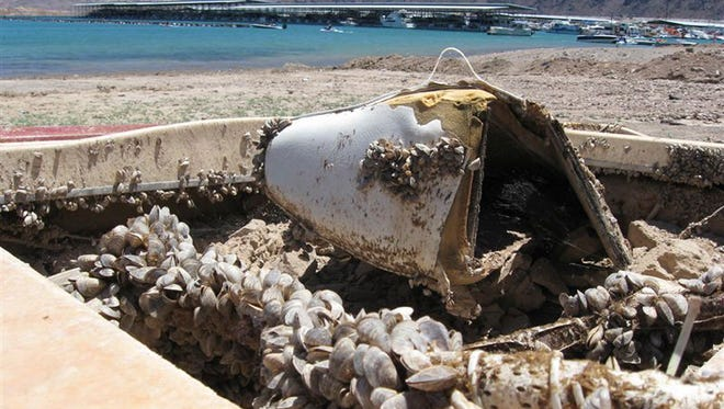 In this July 6, 2009 file photo, invasive quagga mussels cover this formerly sunken boat at Lake Mead in Lake Mead National Recreation Area, Nev.
