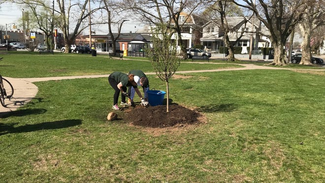 Volunteers plant new tree at Clifton's Hird Park.