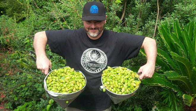 With deliveries of fresh hops from Sodbuster Farms on Sept. 2, McMenamins brewers are brewing up their seasonal fresh-hopped Thundercone Ale.
