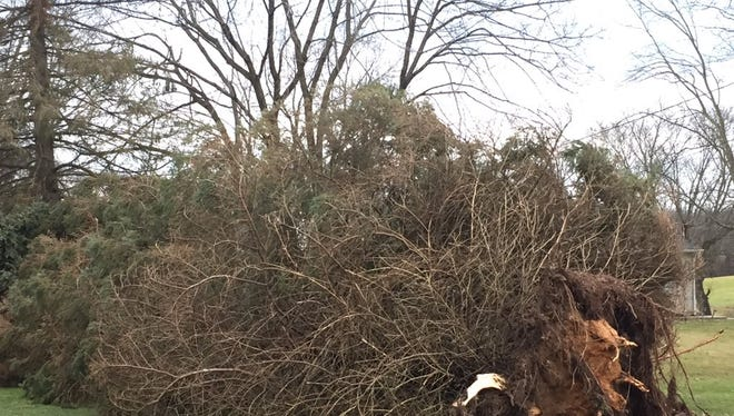 A downed tree is pictured post-storm in York Township.