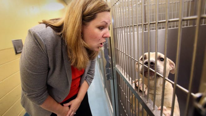 May 20, 2016 — Memphis Animal Services director Alexis Pugh stops to visit with a canine resident while touring the facility after a Friday afternoon press conference where Mayor Jim Strickland introduced Pugh as the new director. She will take the position next month. (Stan Carroll/The Commercial Appeal)