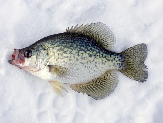 Crappie derby hosts ice fishing feb 17 for New york out of state fishing license