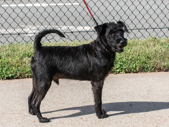 Marcello is one of the dogs from Puerto Rico available