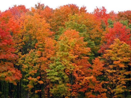 Top fall color drives in michigan and dates to go for West fall