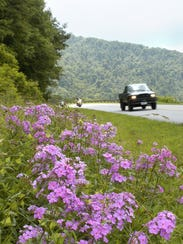Wildflowers grow along the side of the Blue Ridge Parkway