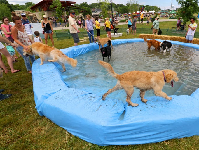 Dogs wander in and around wading pools set up just