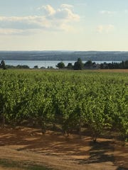 Grapes grow at Three Brothers Wineries and Estates
