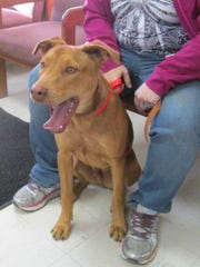 "This mixed-breed male is neutered and nine months old. Named ""Rusty,"" he is owner-impounded, friendly, still in the chewing and digging stage, good with children, housebroken and good with cats. The cost to adopt is $10.39. For more information about adopting a Pet of the Week or other furry friends visit Alamogordo Animal Control, 2910 N. Florida Avenue, Monday through Saturday between noon and 5 p.m. or contact them at 439-4330."