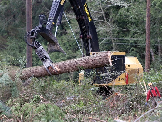 Hansville-logging-3.jpg