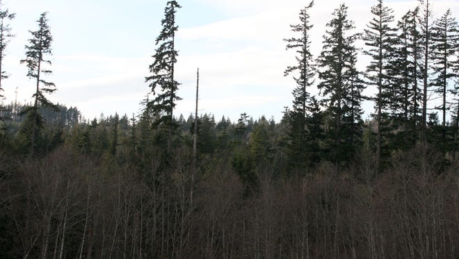 A proposed development would create more than 600 residential lots on 200 wooded acres west of Pendergast Regional Park in Bremerton.