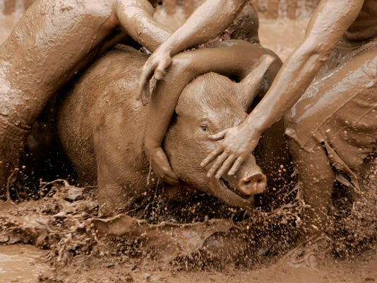 APC PIG TROUBLE FILE 2010.jpg