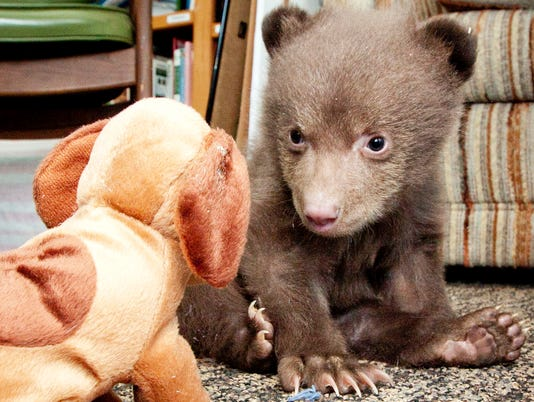 041814tahoe-bear