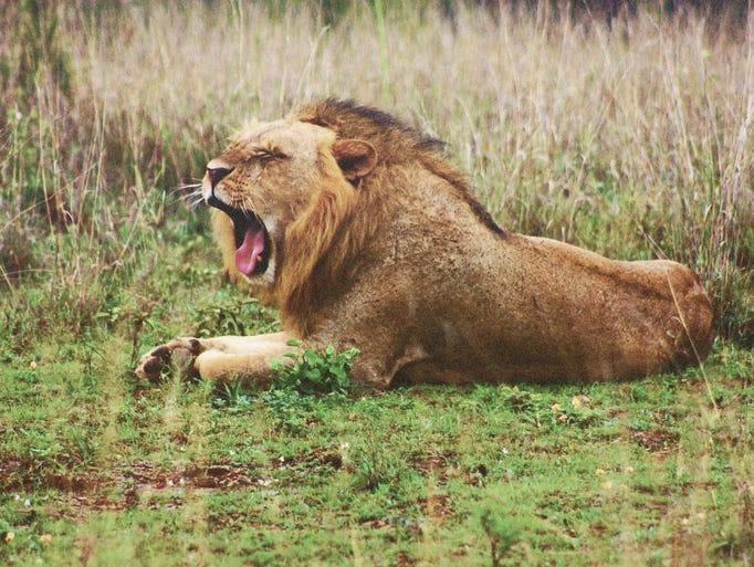 Jennifer Abbott took this photo while on safari with