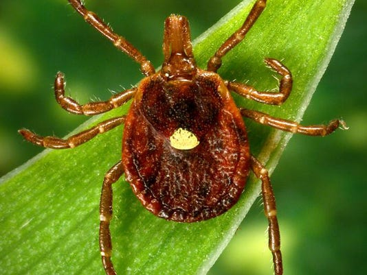 lyme disease explained symptoms ticks treatments and states at risk