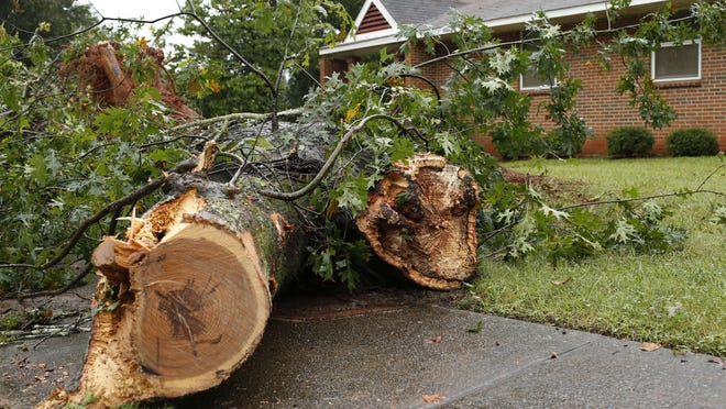 A tree fell Thursday on Dublin Street in Athens, knocking out power to a number of homes.