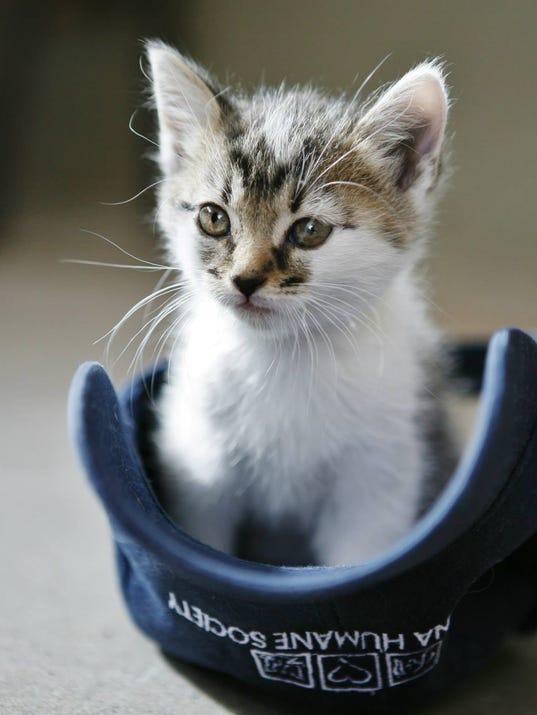 AHS Kitten