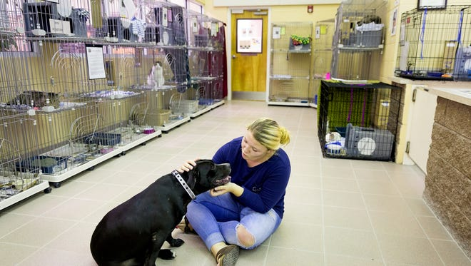 Naples resident Ashley Viconti gets to know Darcy, a 2-year-old labrador terrier mix, as her family adopts the dog at Collier County Domestic Animal Services on Thursday, July 28, 2016, in East Naples. The animal shelter is currently at full capacity and is running a name-your-own-price adoption fee promotion to alleviate the overcrowding.
