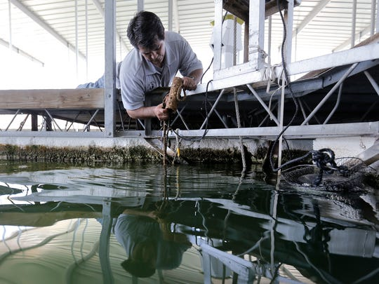 James Dominguez checks some of his low-tech methods of looking for invasive species like the Zebra Mussel in Elephant Butte.