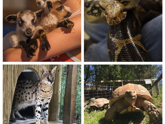Animals killed in the Little Ponderosa Zoo fire