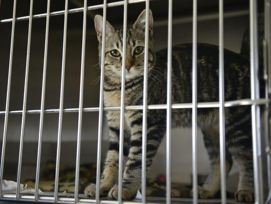 VTD0927_Cats_3343.JPG