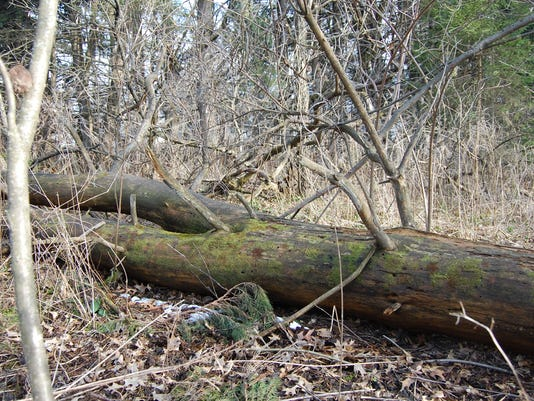 635959953179798370-04.17.16---Fallen-Tree.jpg