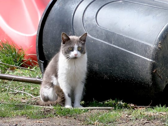 Feeding stray cats would be banned, under the model dog and cat ordinance proposed by the Milwaukee Area Domestic Animal Control Commission for communities in Milwaukee County.