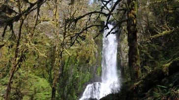 These 5 hikes are hidden in Oregon's remote coastal rainforest