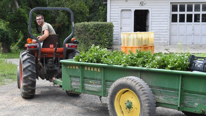 Justin Seelaus drives a tractor load of produce to the farm stand at Obercreek Farm in Hughsonville.
