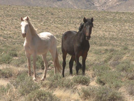 Wild horses 04