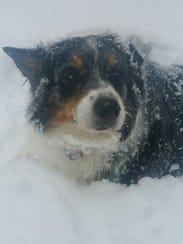 Tessa enjoying the snow.