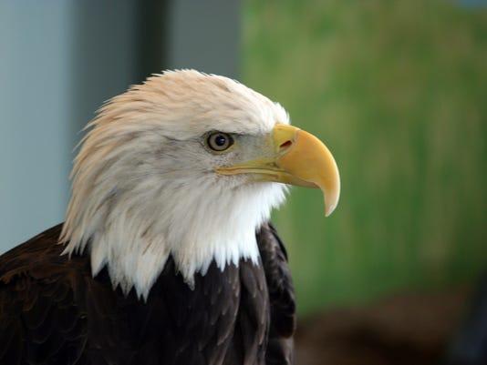 eagle-center.jpg
