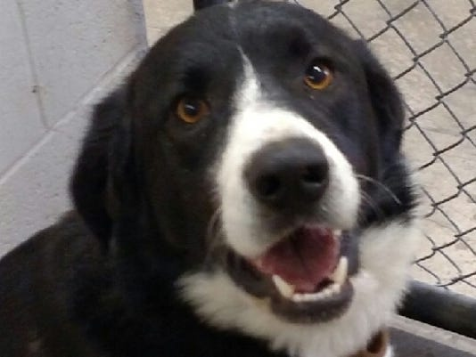 Pet of the Week-Border Collie mix