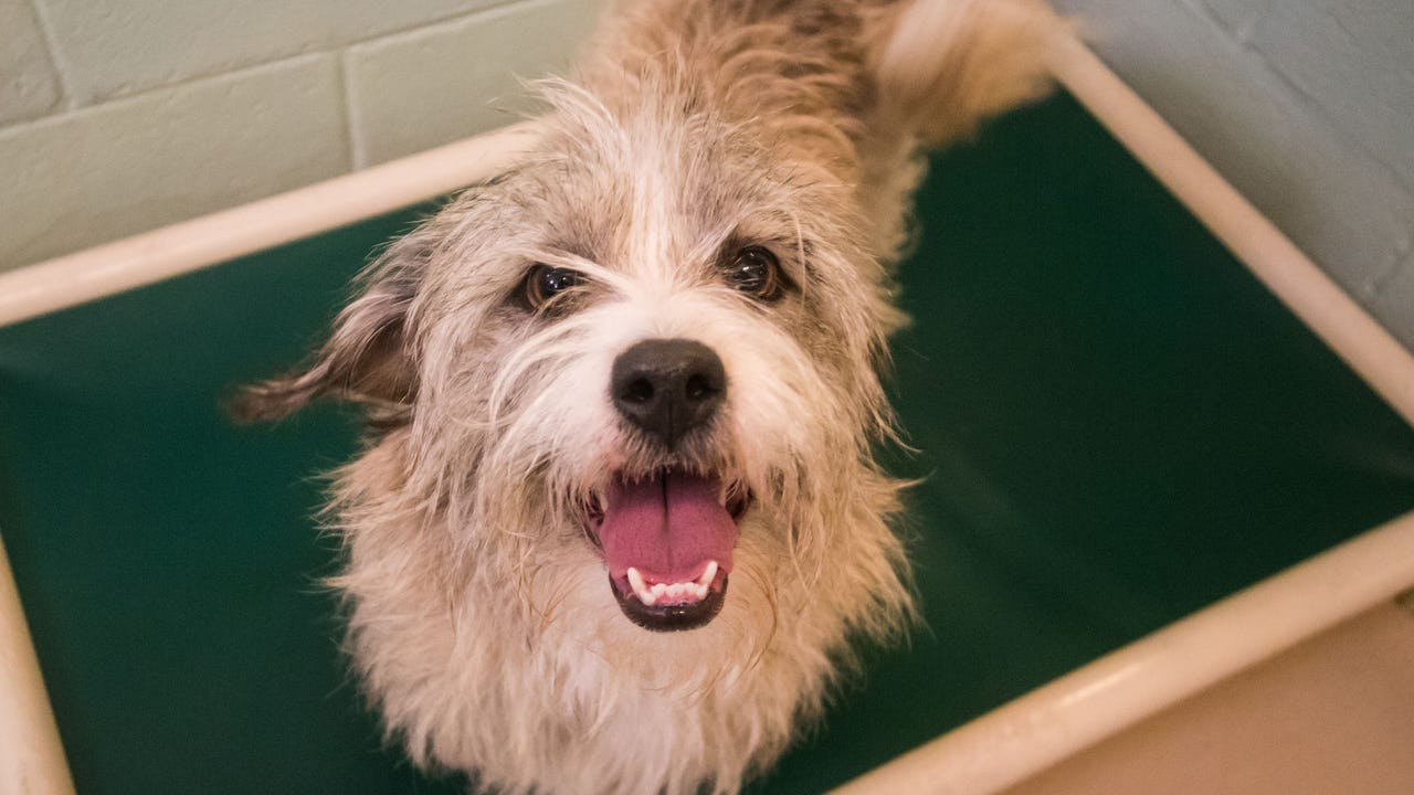The Cumberland County SPCA is urging dog owners to remember their pets due to the upcoming storm and reminds them of the newly enacted tether law.