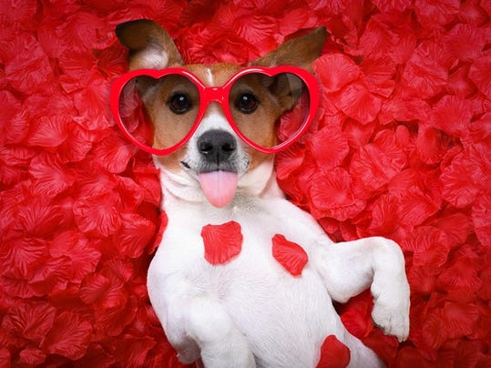 valentinesdaydog_large.jpeg