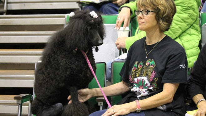 A spectator and her standard poodle sit in the audience at the Wicomico Youth & Civic Center, both enjoying the cushioned seats.