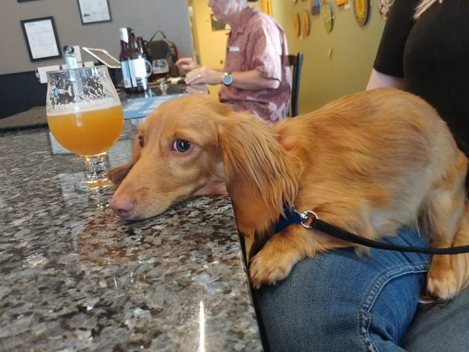 Fort Collins Breweries Dog Friendly