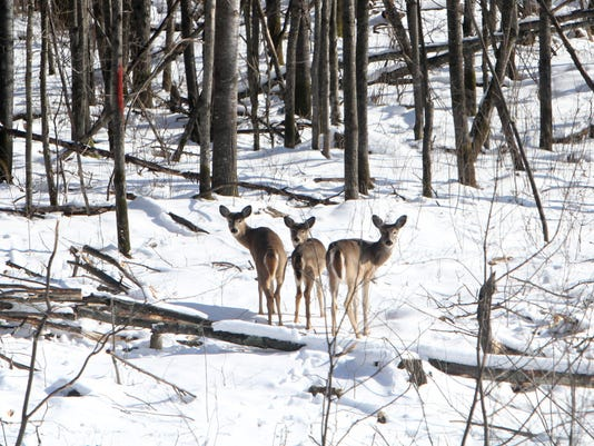 State to see increase in anterless deer harvest