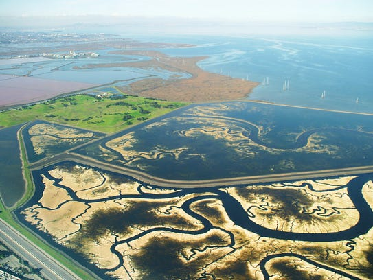 The vast network of commercial  salt ponds and degraded