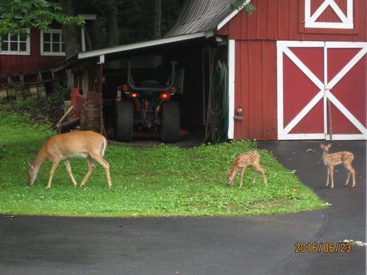 HES-SUB-070716-Heller-Deer.jpg