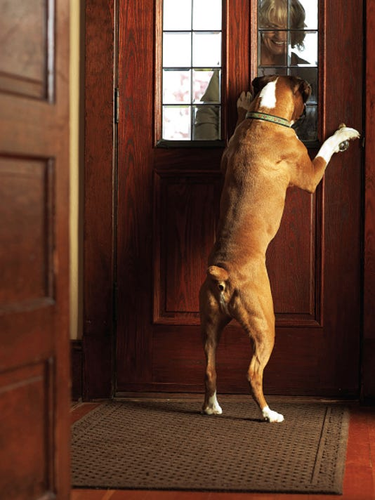 Photo courtesy of Getty Images   As a pet parent, it's important to take the time to correct behavioral issues such as barking or not staying when instructed.