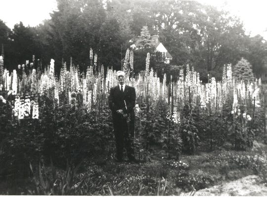 Prize-winning delphiniums were grown at the Jay Estate