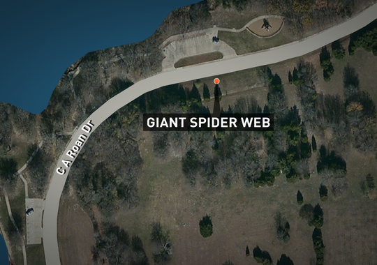 The web's location.