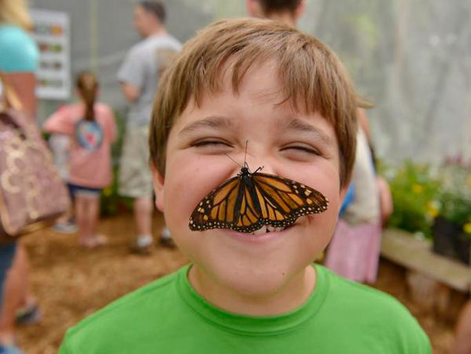 The second annual Butterfly Adventure is being hosted